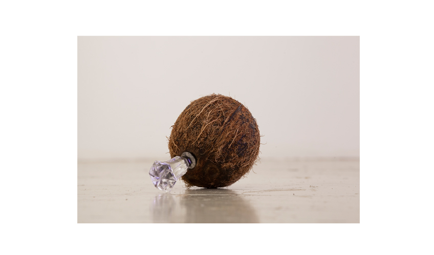 Bomb | 2013 | Coconut, glass